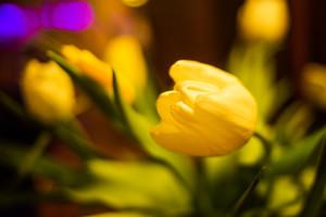 ПРОГРАМА: FLOWERS PARTY